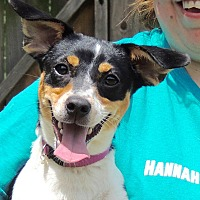 Adopt A Pet :: Jill - Joplin, MO