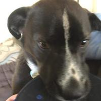 Adopt A Pet :: JADE (JAY) - Spruce Grove, AB