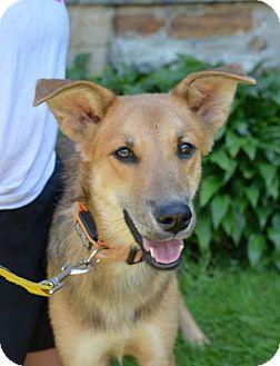 Golden Retriever/Labrador Retriever Mix Dog for adoption in Danbury, Connecticut - Ginger