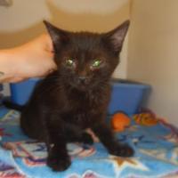 Adopt A Pet :: 9944 Carter - Erie, PA