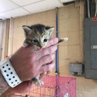 Adopt A Pet :: Parker - Russellville, KY
