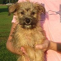 Adopt A Pet :: Chung - Greenville, RI