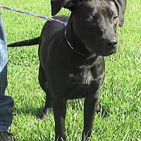 Adopt A Pet :: LeeRoy - Reeds Spring, MO