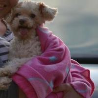 Adopt A Pet :: Rowan - Fairfield, OH