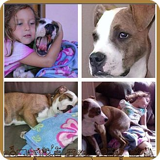 Boxer/American Pit Bull Terrier Mix Dog for adoption in San Diego, California - Rocky