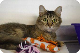 Domestic Shorthair Cat for adoption in Elyria, Ohio - Winnie
