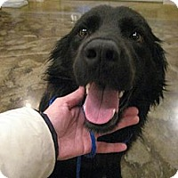 Adopt A Pet :: Boo - Kingwood, TX