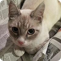 Adopt A Pet :: Benedict - Portland, OR