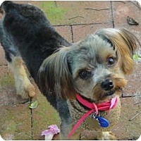 Adopt A Pet :: Ranger - West Palm Beach, FL