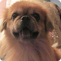 Adopt A Pet :: Finnley - N. Fort Myers, FL