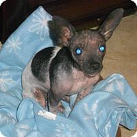 Adopt A Pet :: ABBI_GIRL - Raleigh, NC