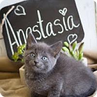 Adopt A Pet :: Anastasia - Coral Springs, FL