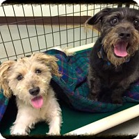 Terrier (Unknown Type, Medium) Mix Dog for adoption in Waco, Texas - Franklin (and Montgomery)