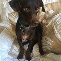 Adopt A Pet :: Chip - Tomball, TX