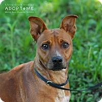 Adopt A Pet :: Gemma - Edwardsville, IL