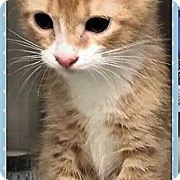 Adopt A Pet :: Caraway - Chattanooga, TN