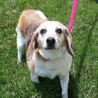Adopt A Pet :: Josie - Thomasville, NC