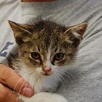 Adopt A Pet :: Mason - Brooklyn, NY