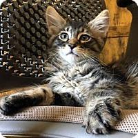 Adopt A Pet :: Jiff - Las Vegas, NV