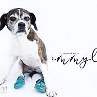 Adopt A Pet :: Emmy Lou - Los Angeles, CA