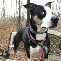 Adopt A Pet :: Missy - Canastota, NY
