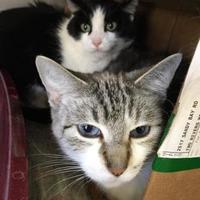 Adopt A Pet :: Baby - Manitowoc, WI