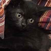 Adopt A Pet :: Fizer - Wilmington, OH