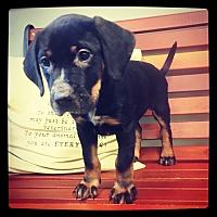 Adopt A Pet :: Gabriella - Grand Bay, AL