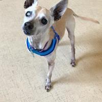 Adopt A Pet :: Dillinger - San Francisco, CA