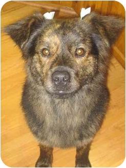 Nova Scotia Duck-Tolling Retriever Mix Dog for adoption in New Boston, New Hampshire - Rascal