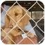 Photo 2 - Dachshund Dog for adoption in Vista, California - Mia