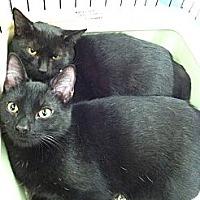Adopt A Pet :: Shadow - Riverhead, NY