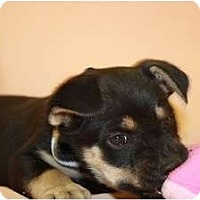 Adopt A Pet :: Jasmine - Broomfield, CO