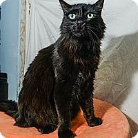 Adopt A Pet :: Julio - New York, NY