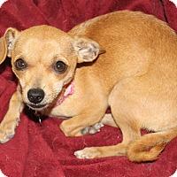 Adopt A Pet :: Abby-Gal- watch my video! - Temecula, CA