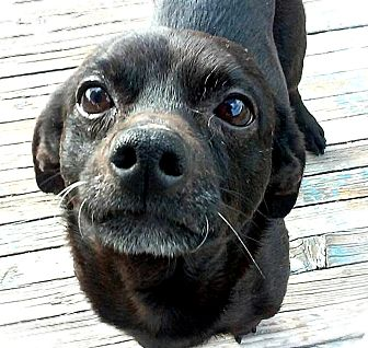Dachshund Mix Dog for adoption in Tijeras, New Mexico - Marvin