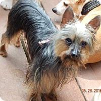 Adopt A Pet :: Trudy(4.5 lb) A Lil' Character! - SUSSEX, NJ