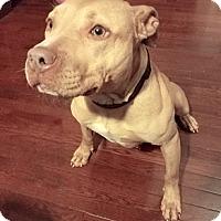 Adopt A Pet :: Bell - Cincinnati, OH