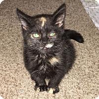 Adopt A Pet :: Echo - Williston Park, NY
