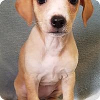 Adopt A Pet :: Zelena - Denver, CO