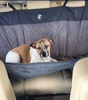 Hound (Unknown Type) Mix Dog for adoption in Nixa, Missouri - Snail # 571