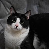 Adopt A Pet :: Sylvester - Maryville, TN