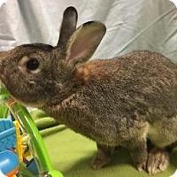 Adopt A Pet :: Maxx - Woburn, MA