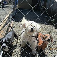 Adopt A Pet :: Garcia - Tillamook, OR