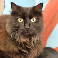 Adopt A Pet :: Loki - Redmond, OR