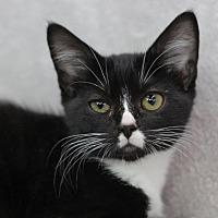 Adopt A Pet :: Hopper M - Raleigh, NC