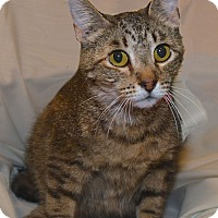Adopt A Pet :: Ethel - Stevensville, MD