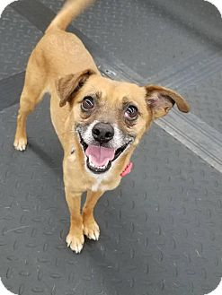 Terrier (Unknown Type, Small) Mix Dog for adoption in Plainfield, Illinois - Theodore