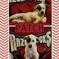 Adopt A Pet :: Patch-pending adoption - East Hartford, CT