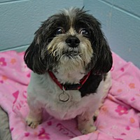 Adopt A Pet :: Princess - Wheaton, IL